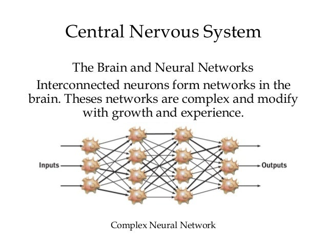 Chapter 2 myers psychology 9e 29 central nervous system ccuart Choice Image