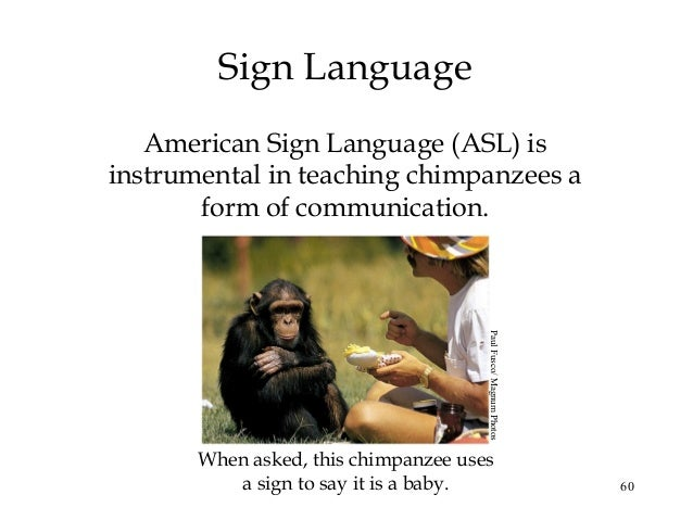 Can chimps learn sign language - answers.com