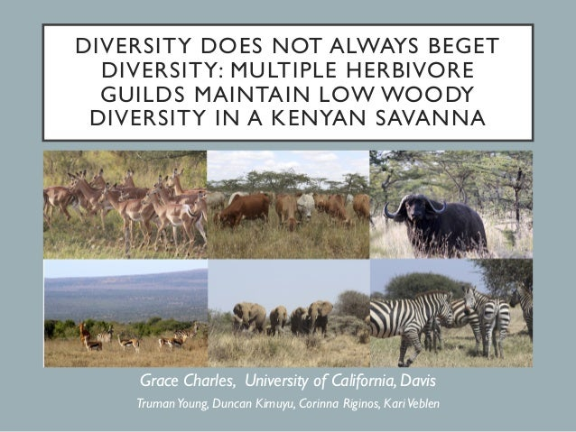DIVERSITY DOES NOT ALWAYS BEGET DIVERSITY: MULTIPLE HERBIVORE GUILDS MAINTAIN LOW WOODY DIVERSITY IN A KENYAN SAVANNA Grac...