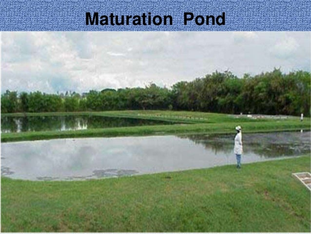 Waste stabilisation pond design for Design of oxidation pond ppt