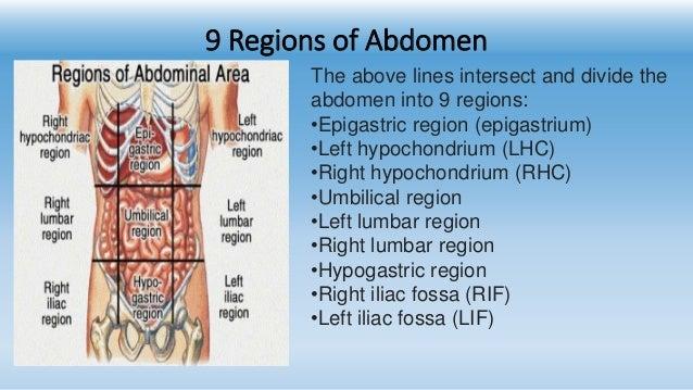 9 Region Of Abdomen