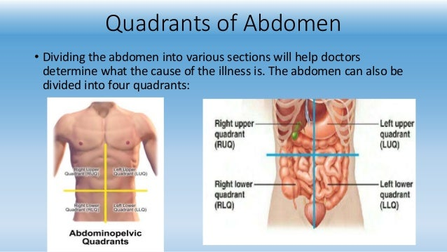 9 Region Of Abdomen