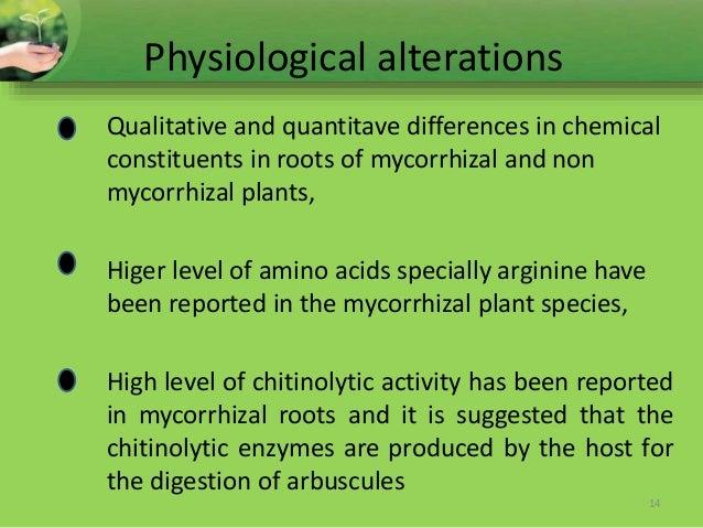 endomycorrhizal slide - photo #21