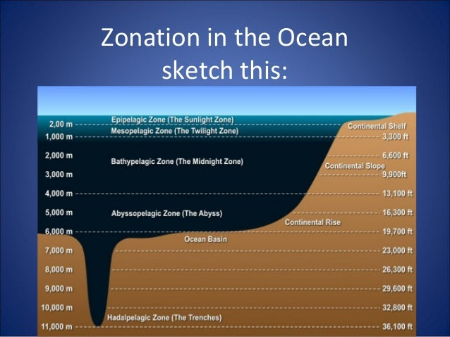 Zonation in the Ocean sketch this: