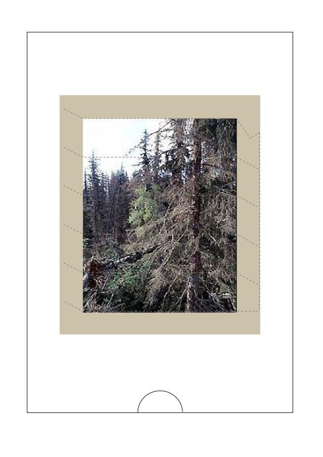Alaska-Plagas