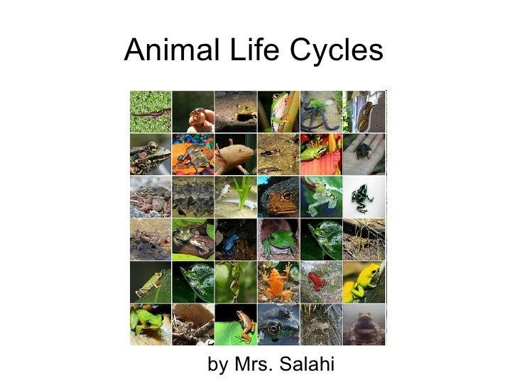Animal Life Cycles  by Mrs. Salahi