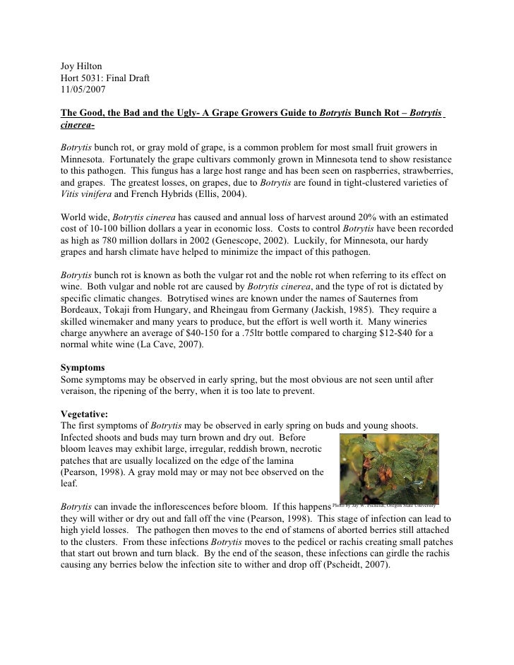 Joy Hilton Hort 5031: Final Draft 11/05/2007  The Good, the Bad and the Ugly- A Grape Growers Guide to Botrytis Bunch Rot ...