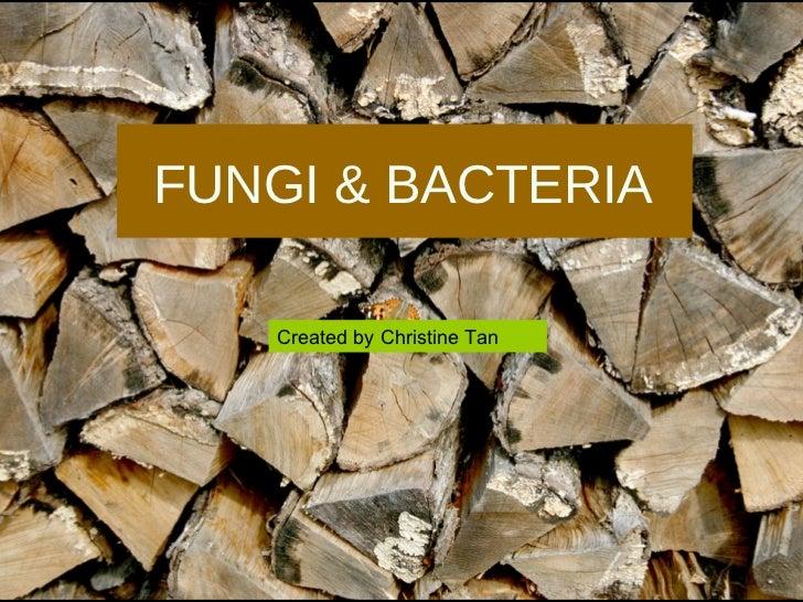 FUNGI & BACTERIA Created by Christine Tan
