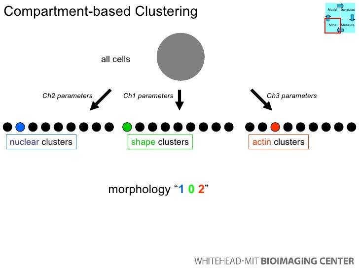 """all cells Ch1 parameters Ch2 parameters Ch3 parameters morphology """" 1   0   2 """" Compartment-based Clustering shape  cluste..."""