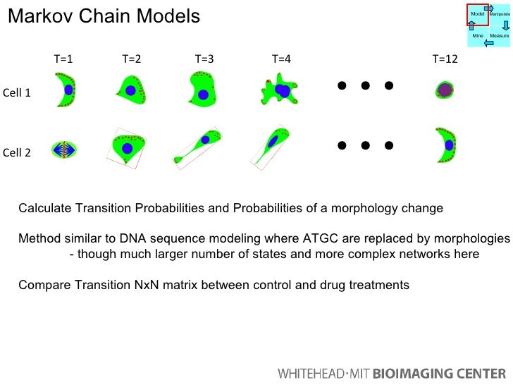 T=1 T=2 T=3 T=12 T=4 Cell 1 Cell 2 Calculate Transition Probabilities and Probabilities of a morphology change Method simi...