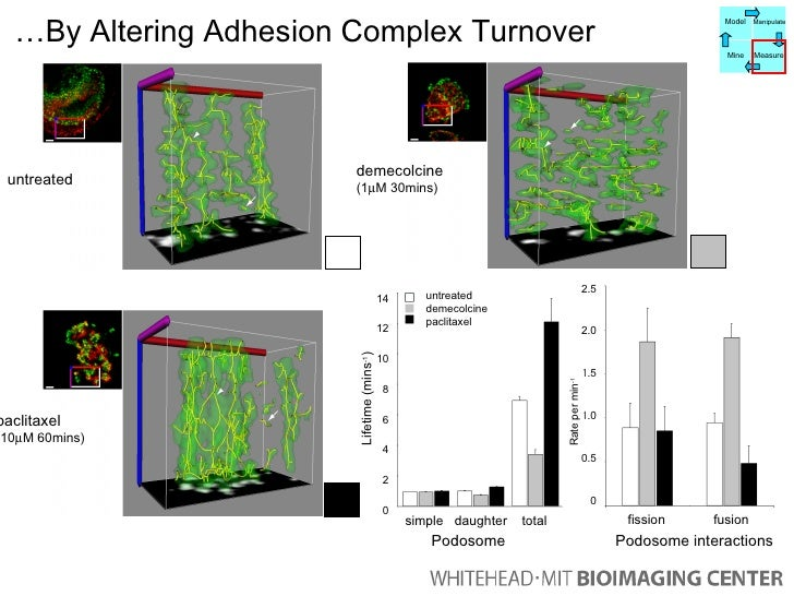 … By Altering Adhesion Complex Turnover untreated demecolcine (1  M 30mins) paclitaxel (10  M 60mins) untreated demecolc...