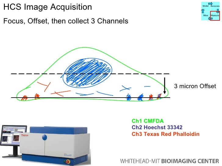HCS Image Acquisition Focus, Offset, then collect 3 Channels 3 micron Offset Ch1 CMFDA Ch2 Hoechst 33342 Ch3 Texas Red Pha...