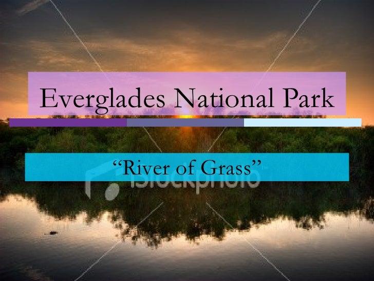 """Everglades National Park """" River of Grass"""""""