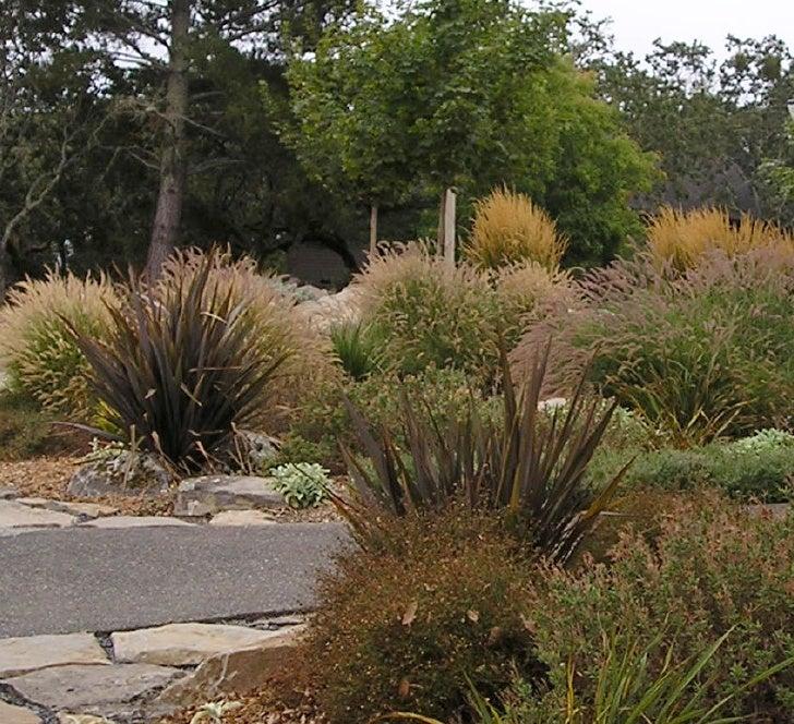 Mediterranean garden with grasses