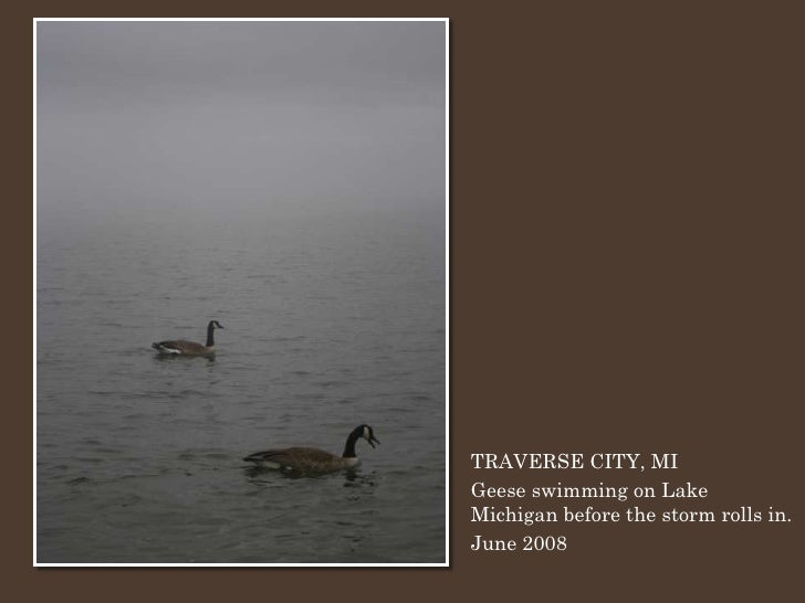 TRAVERSE CITY, MI Geese swimming on Lake Michigan before the storm rolls in. June 2008