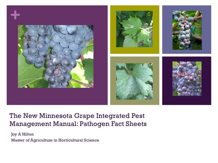 The New Minnesota Grape Integrated Pest Management Manual: Pathogen Fact Sheets Joy A Hilton Master of Agriculture in Hort...