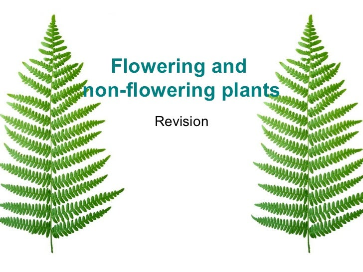 Flowering and  non-flowering plants Revision