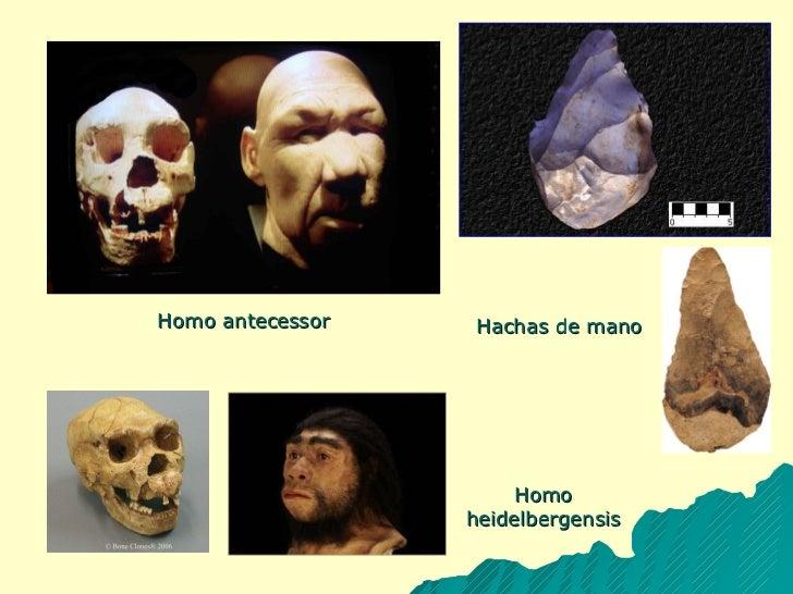 Homo antecessor Hachas de mano Homo heidelbergensis