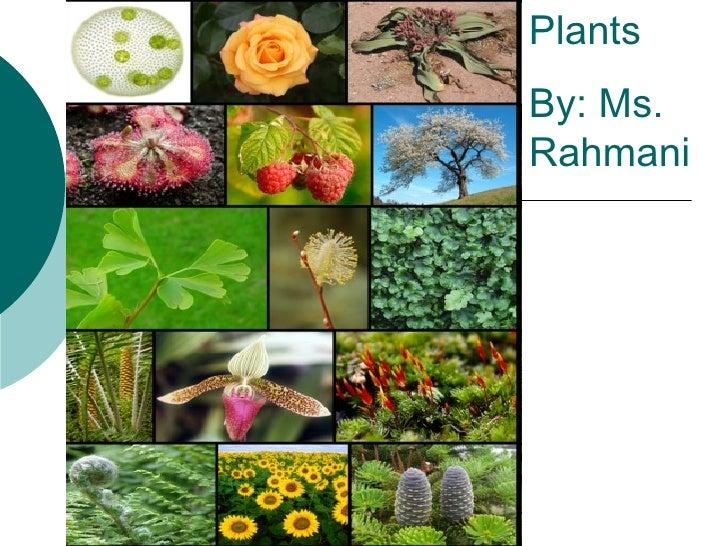 Plants  By: Ms. Rahmani