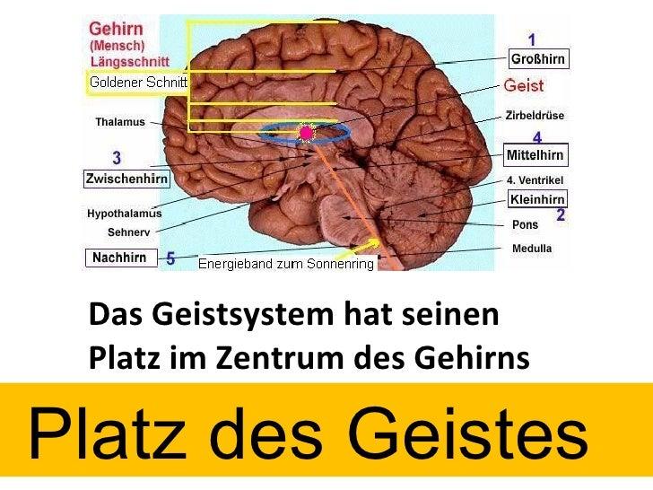 Das Geistsystem hat seinen Platz im Zentrum des Gehirns  Platz des Geistes