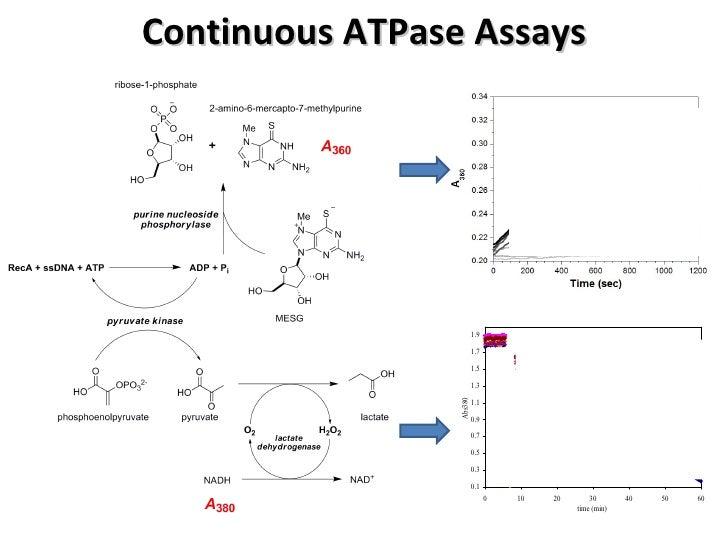 RecA foscused antibacterial screening