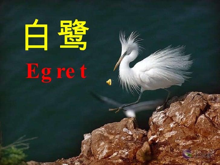 白鹭 Egret