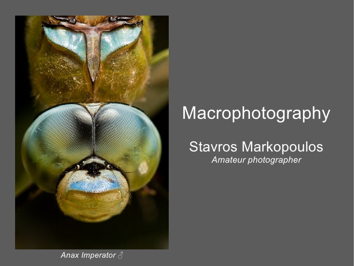 Macrophotography                    Stavros Markopoulos                       Amateur photographer     Anax Imperator ♂