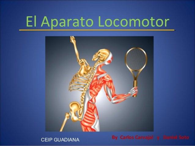 El Aparato Locomotor  CEIP GUADIANA  By Carlos Carvajal y Daniel Soto