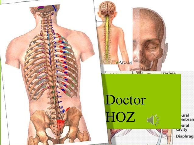 Doctor HOZ