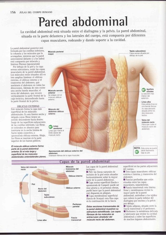 Introducción a la antomía del abdomen