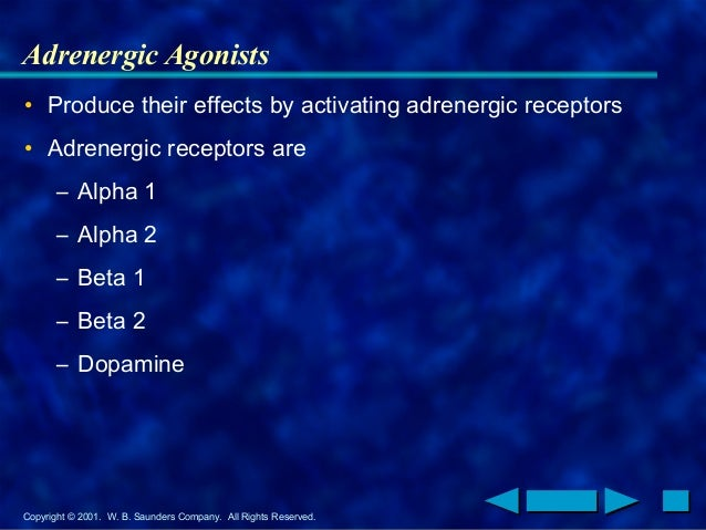 Copyright © 2001. W. B. Saunders Company. All Rights Reserved. Adrenergic Agonists • Produce their effects by activating a...