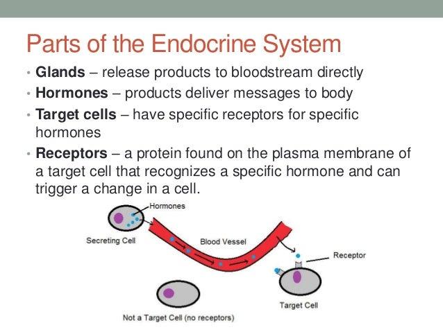 A.3 endocrine system & glands