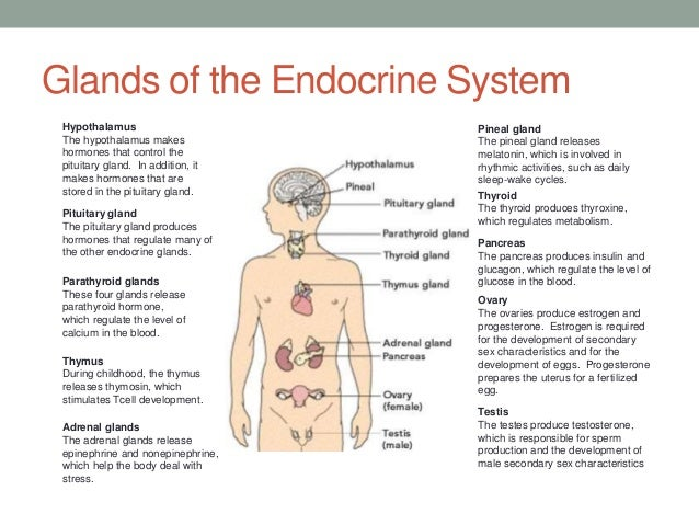 the endocrine system and its functions Human endocrine system: human endocrine system, group of ductless glands that secrete hormones necessary for normal growth and development, reproduction, and homeostasis.