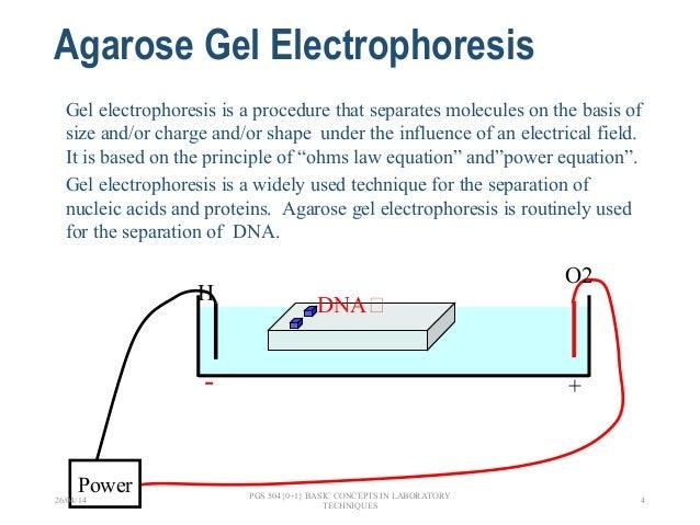 A. gel electrophoresis