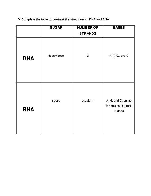 RNA worksheet – Dna Rna Worksheet