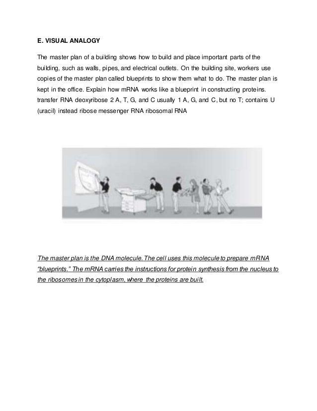Rna worksheet 12 e visual analogy malvernweather Gallery