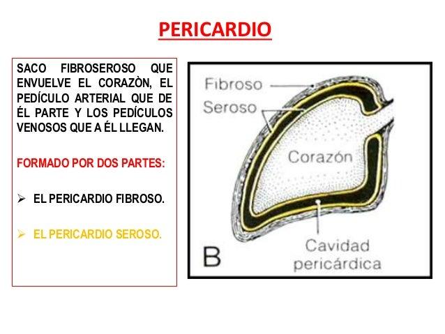 Anatomía del Pericardio y el Corazón