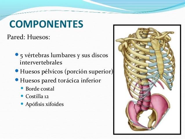 Anatomía del Abdomen (Músculos, Irrigación e Inervación)