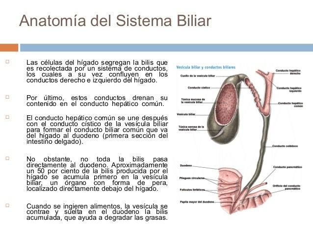 Anatomía de la Vesícula Biliar