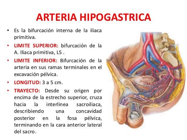 ARTERIA ILIACA PRIMITIVA PDF DOWNLOAD
