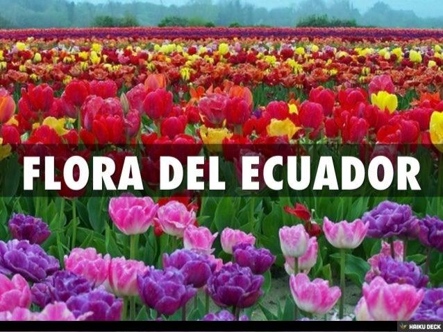 Flora del ecuador for Plantas ornamentales del ecuador