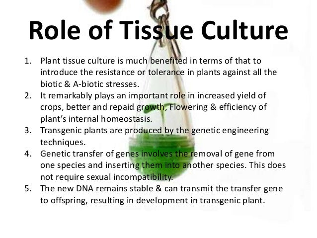 tissue culture thesis Mol biotechnol 2007 37 169 180 doi 101007 s12033-007-0031-3 review paper history of plant tissue culture trevor a thorpe published online 27 june 2007.