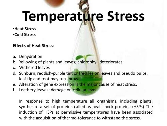 Cold stress in plants.