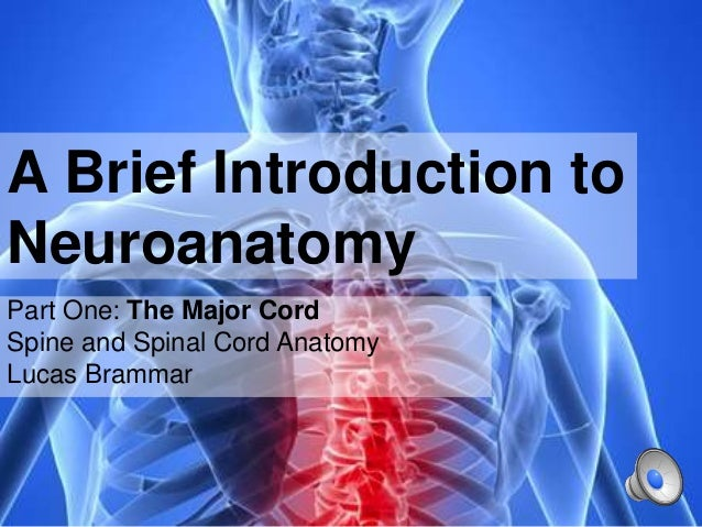 A Brief Introduction to Neuroanatomy Part One: The Major Cord Spine and Spinal Cord Anatomy Lucas Brammar