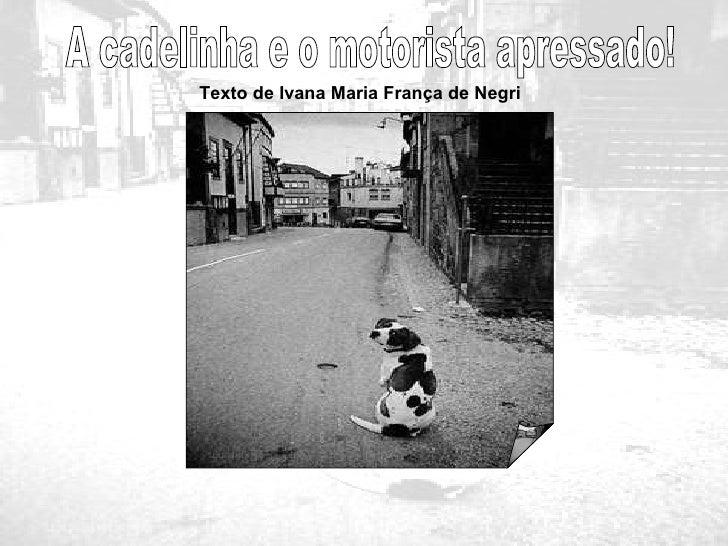A cadelinha e o motorista apressado! Texto de Ivana Maria França de Negri