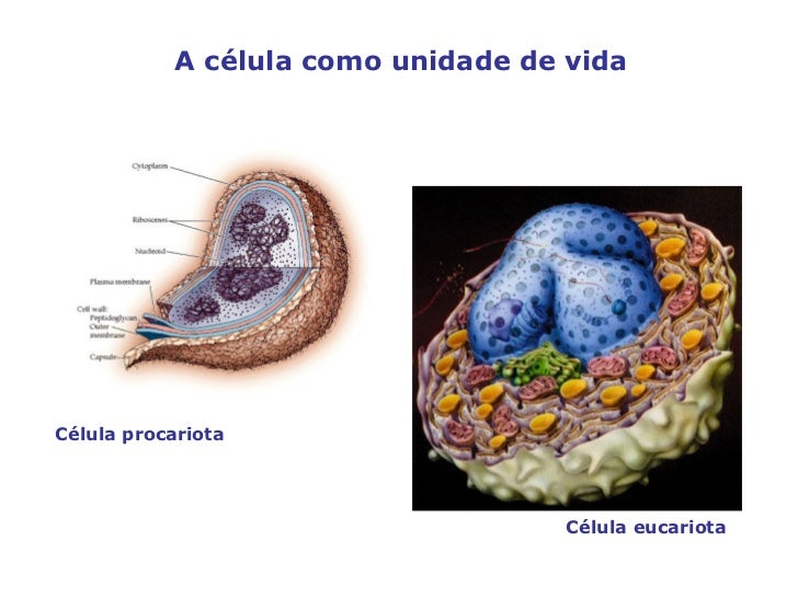 A Célula Slide 3