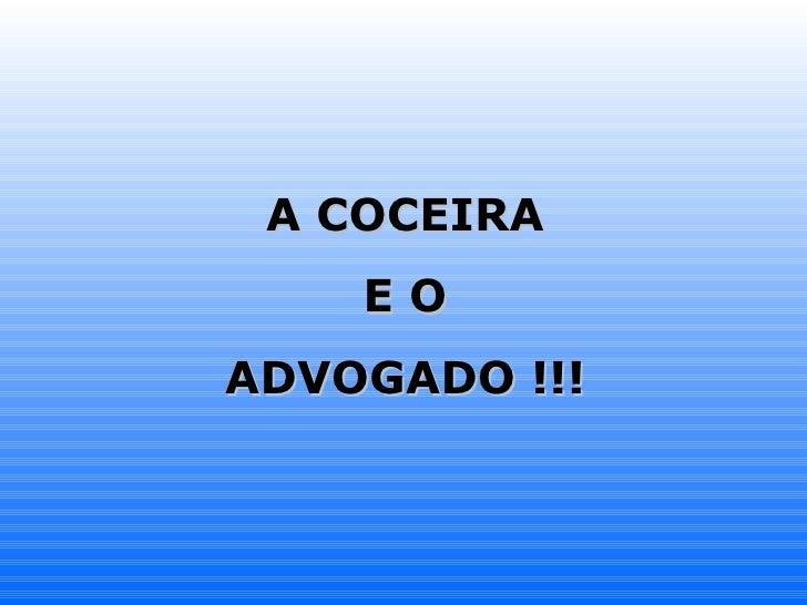 A COCEIRA E O  ADVOGADO !!!