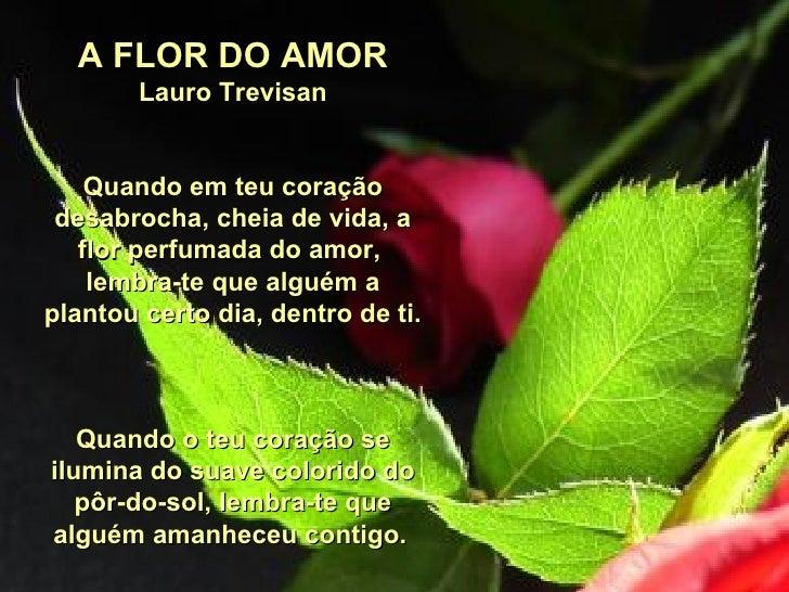A FLOR DO AMOR Lauro Trevisan Quando em teu coração desabrocha,cheia de vida,a flor perfumada do amor, lembra-te que al...