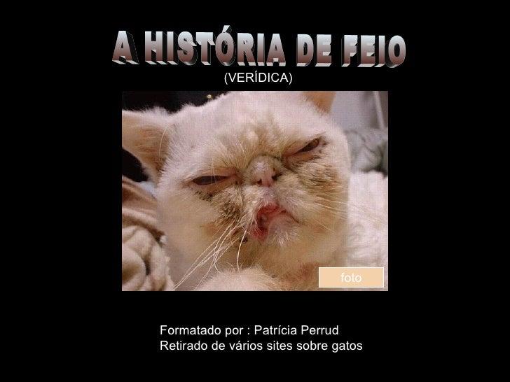 A HISTÓRIA DE FEIO (VERÍDICA) Formatado por : Patrícia Perrud Retirado de vários sites sobre gatos foto