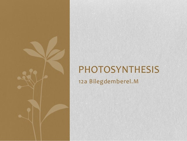 PHOTOSYNTHESIS 12a Bilegdemberel.M
